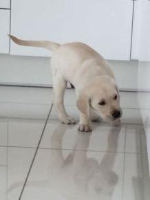 8 weeks Sniffing kitchen floor