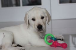 8 weeks sitting with chew toy