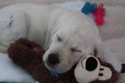 8 weeks asleep on toy