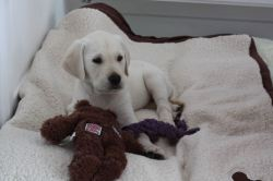 8 weeks Lying with toy