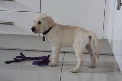8 weeks Playing with his ragger.