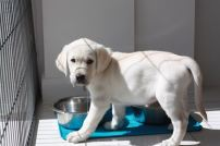 8 weeks Standing next to water bowl with water dripping from mouth