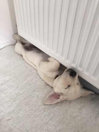 10 weeks lying on back right up againt wall under radiator