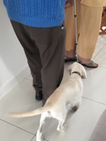 13 weeks following a white cane